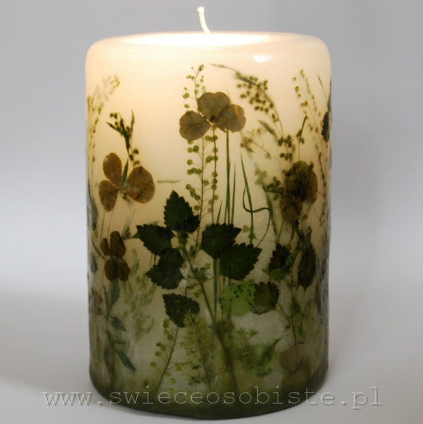 Candle of the green meadow, big