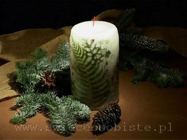 świeca zimowa, leśna, duża