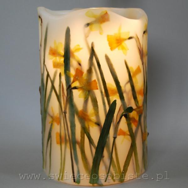 Lampion parafinowy z suszonymi miniaturowymi żonkilami. Wysokość ok. 22 cm, średnica ok. 14, 5 cm (liczona ze skrzydłem 18 cm).
