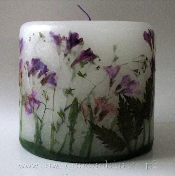 świeca łąkowa z fioletowymi kwiatami, mała
