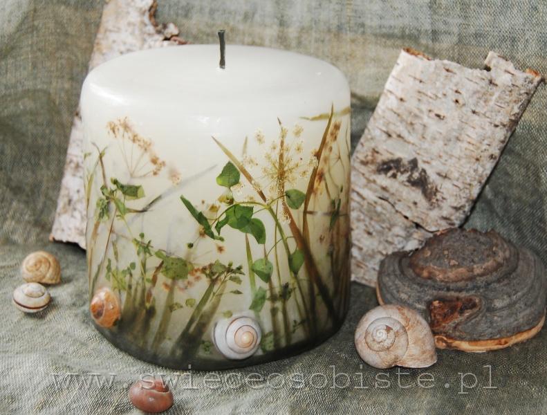 świeca łąkowa ze skorupkami ślimaków, mała