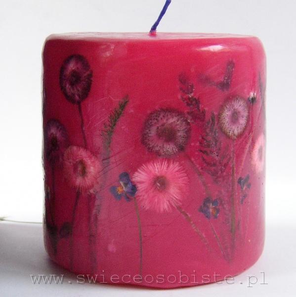 różowa świeca ze stokrotkami ogrodowymi, mała