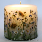 Candle of the spring meadow, small