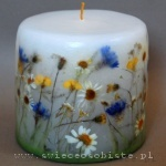 candle of the meadow, small