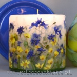 Candle of the meadow with larkspur, small
