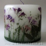 candle of the meadow with violet flowers, small