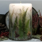 Candle of the forest with ferns, big