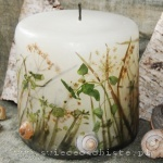 candle of the meadow with snail's shell, small