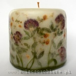 candle of the meadow with clover, small