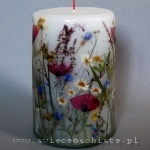 candle of the meadow, big