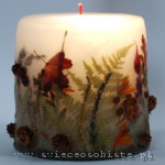 autumn candle of the forest, small