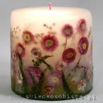 świeca ze stokrotkami pomponowymi i gipsówką, mała