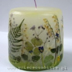 spring candle of the forest, small